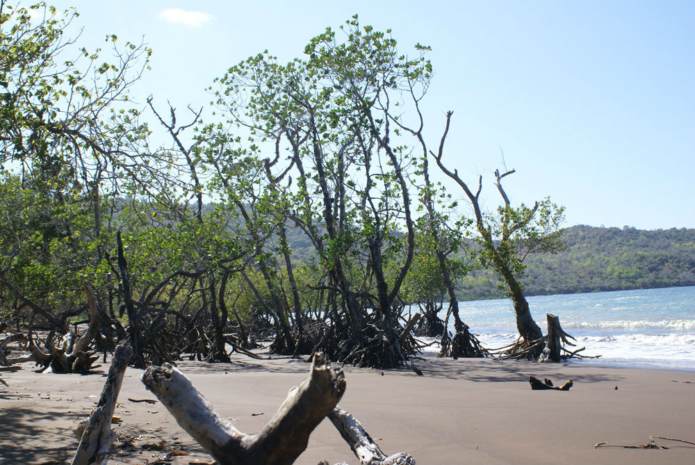 Mangroves for mankind
